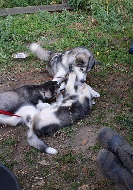 jutah met pups